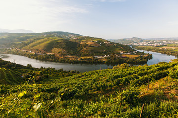 View of the Douro river, and vineyards are on a hills in Douro Valley, Portugal..