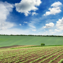 Fototapete - Scenic landscape with a green spring field