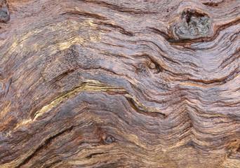 Beautifuly aged trunk