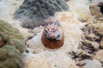 underwater world - cone snail