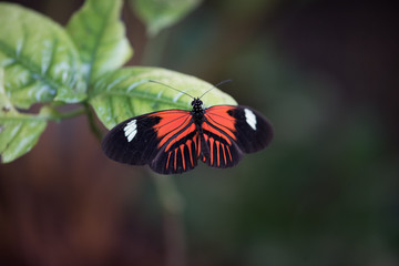 Orange and Black Butterfly on a leaf