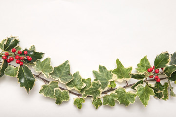 Holly and Ivy branch isolated