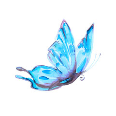 beautiful blue  butterfliy, isolated  on a white