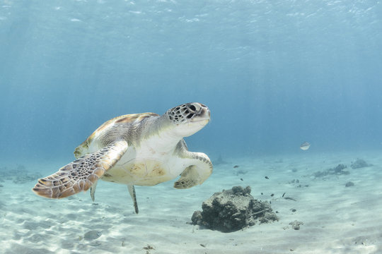 Marine turtle on the left corner swimming to the right with blue background