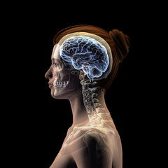 Profile of Woman's Head with Skull and Brain on Black Background