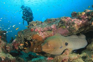 Scuba diver and moray eel