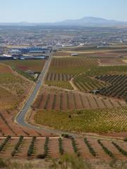 Campos de olivos en Jaen (Andalucia, España)