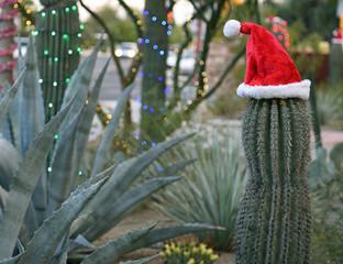 Saguaro-Kaktus mit einer Weihnachtsmannmütze in einem Wüsten-Garten
