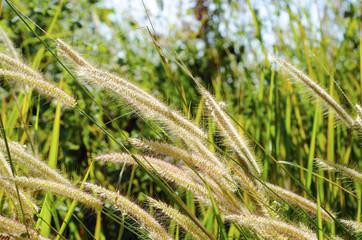 Grass flower background pattern blurred