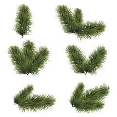 Green lush spruce branches for Christmas background. Vector illustration