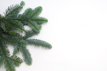 Evergreen Fir Branches Isolated on White Background with Copy Paste.