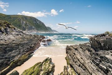 Tsitsikamma national park ocean view seagull