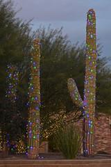 Mit bunten Lichterketten umwickelte Saguaro-Kakteen
