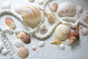 decor of seashells