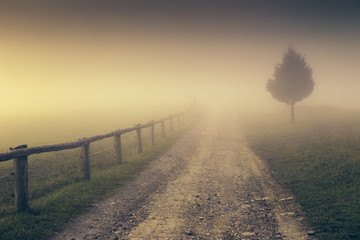 A lane through the landscape in the mist.