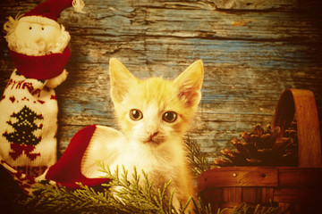 Little cat Christmas cards.