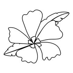 beautiful tropical flowers design