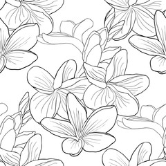 seamless pattern coloring Hawaiian plumeria flower an exotic  illustration
