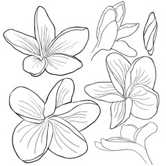 set coloring Hawaiian plumeria flower an exotic.  illustration