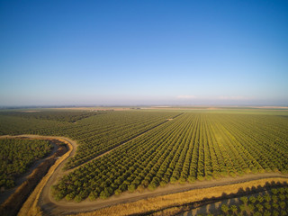 Beautiful aerial view of large almond orchard