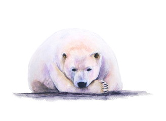 watercolor white bear on white background