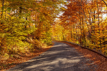 Road in autumn forest in bright sunlight