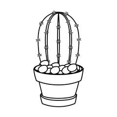 cartoon cactus in a pot