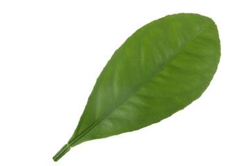 leaf of orange isolated