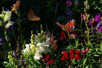 Schmetterling 403