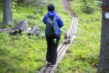 Woman is walking with the dog in the forest. Wooden duckboards.