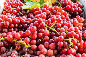 Fototapete - Red seedless grapes with leaves