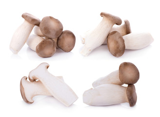 King oyster mushroom Pleurotus eryngii on white background