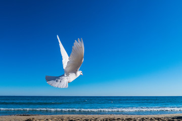 White dove flying to the sea