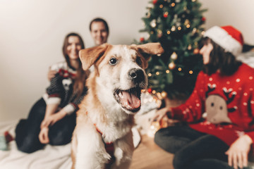 happy family in stylish sweaters and cute funny dog celebrating at christmas tree with lights. emotional moments. merry christmas and happy new year concept. space for text
