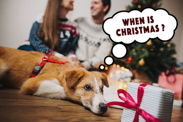 happy couple hugging at christmas tree with lights and cute dog looking at gift and thinking. funny  family moments. merry christmas and happy new year concept, seasonal greetings, happy holidays.