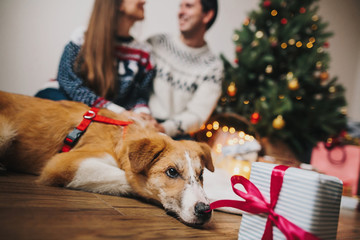 happy couple hugging at christmas tree with lights and cute dog looking at gift. funny  family moments. merry christmas and happy new year concept, seasonal greetings, happy holidays. atmospheric
