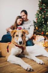 happy couple hugging embracing at christmas tree with lights and brown dog looking. happy family moments. merry christmas and happy new year concept, seasonal greetings, happy holidays