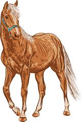 A sketch of a young horse, standing calmly and looking into the distance.