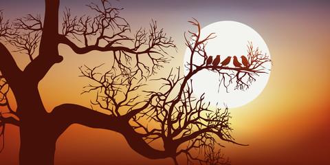 oiseau - arbre - branche - coucher de soleil - nature - calme - symbole - liberté - bonheur - concept - naturel