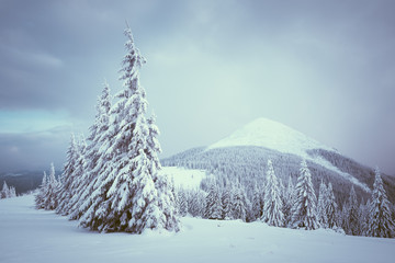 Fototapete - Christmas landscape with fir tree in the snow