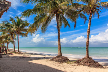 Beach in the Caribbean with coconut trees
