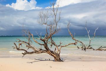 Beach in the Caribbean.