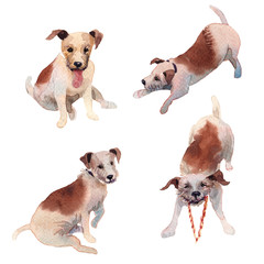 JackRussell terrier dog hand drawing watercolor