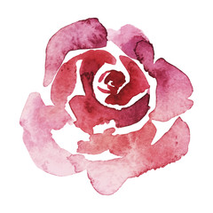 vector pink rose watercolor hand-painted, isolated on white, valentine