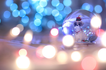 Snow globe Christmas dog, Chinese animal zodiac. 2018 is the year of the Dog,  zodiac animal, bokeh, concept