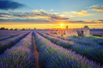 Lavender field at sunset Fotoväggar