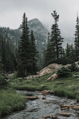 Scenic view of stream on field against trees and mountains