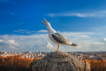 Seagull with Rome sunset panorama