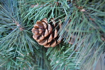 Pinecone ART