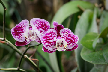 Image of beautiful purple orchid flowers in the garden.